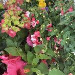 Blumen: Warum sie gesund, fit und schön machen