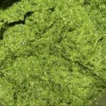Bärlauch Pesto: So einfach geht's